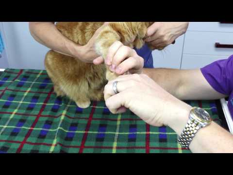 How to Clip Your Cat or Dog's Claws
