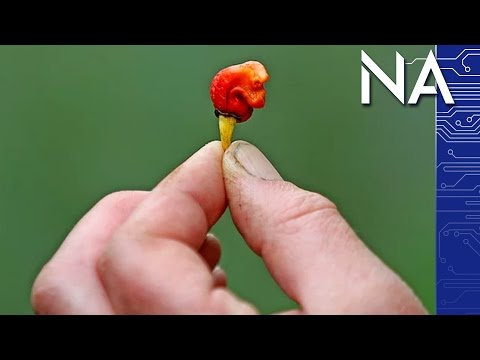 There's a New Hottest Pepper and it Might Kill You