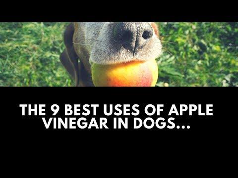 The 9 Best Uses of Apple Vinegar in Dogs