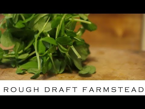 HOW TO USE PEA SHOOTS