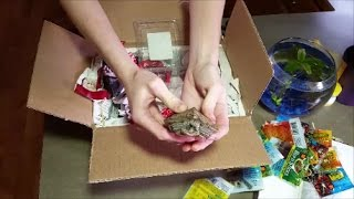 Turtle Unboxing!!