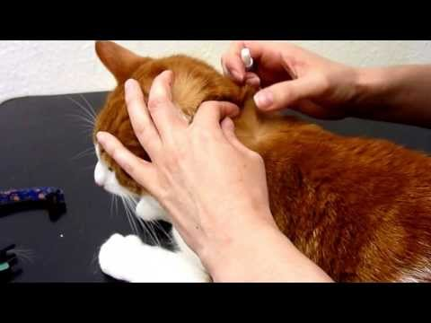 How to administer a Spot-On Flea Treatment to your cat