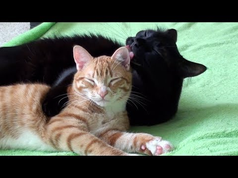 Cute Cats Hugging Compilation