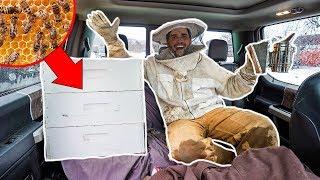 Transporting 10,000 HONEY BEES to My BACKYARD FARM!!! (Bad Idea)