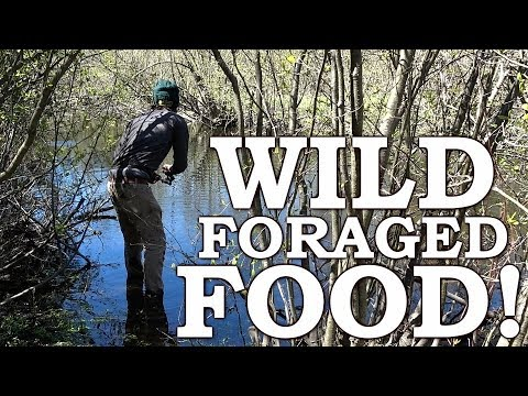 WILD FOOD SURVIVAL CHALLENGE   SPRING EDIBLES Over OPEN FIRE   BURDOCK, LEAKS, THISTLE & MAPLE SYRUP