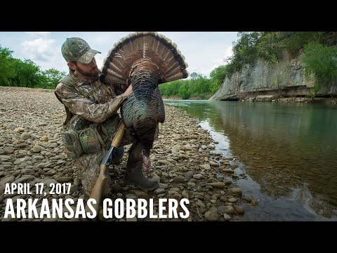 Arkansas Public Land Gobblers - How To Bowhunt Turkeys