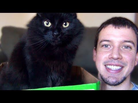 Thankful for Cute Kitties!