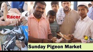 SUNDAY pigeons Market Guru Mandir Karachi Pakistan - Price Updates