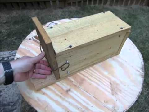 How to Make a Squirrel Box