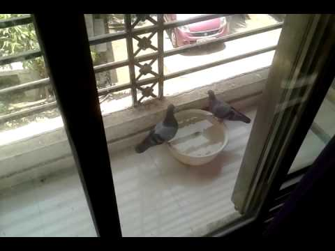 Keep bucket of water in your balcony for birds
