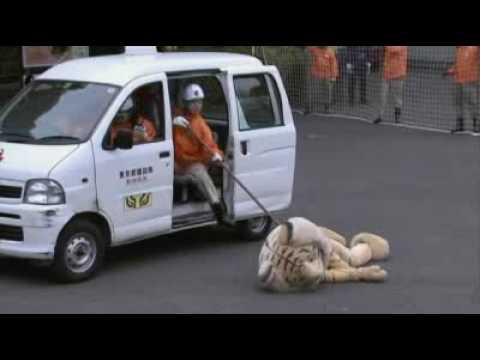 Year of the tiger: Japanese zoo taking no chances