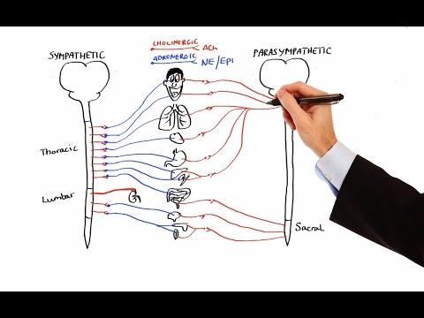 Pharmacology - AUTONOMIC NERVOUS SYSTEM (MADE EASY)