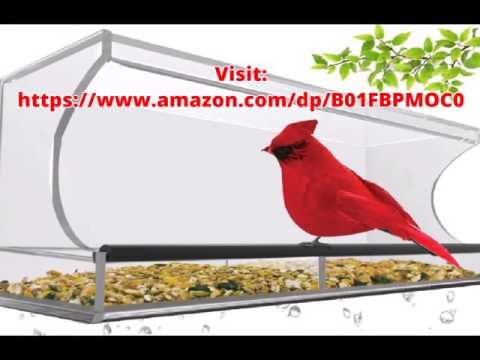Suction Cup Window Bird Feeder  ***  Best Christmas Gift