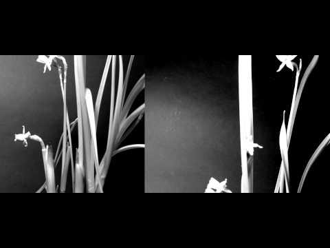 Artificial Light Plant behavior | Time Lapse
