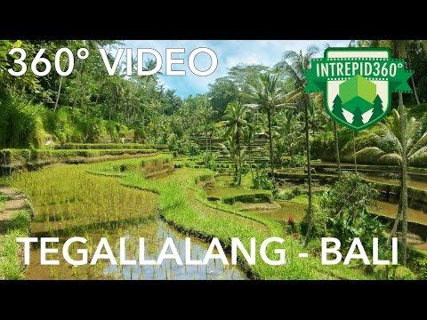 360 VIDEO - Tegallalang Rice Paddy - BALI, Indonesia - HD
