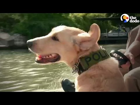 Dogs Sniff Out Drugs | The Dodo