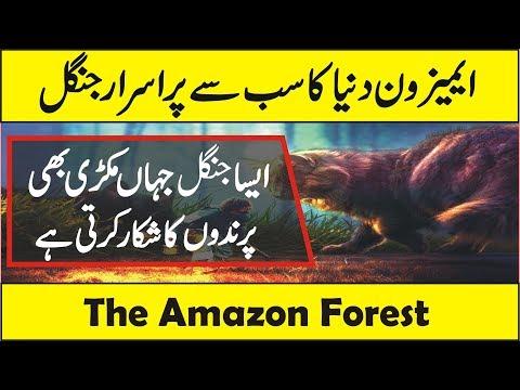 Amazon Rainforest Wildlife Full Documentary in Urdu/Hindi (Amazon The Lungs of Earth)