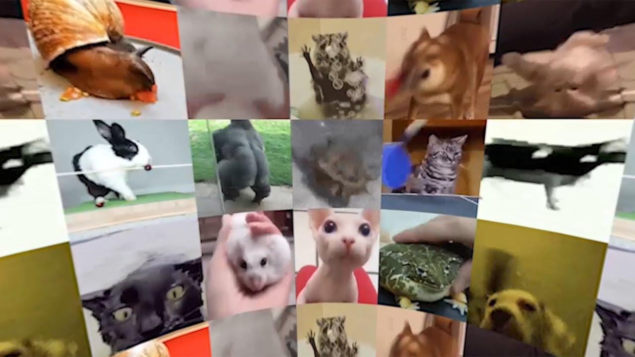 Pets Vibing in Virtual Reality (360° Video)