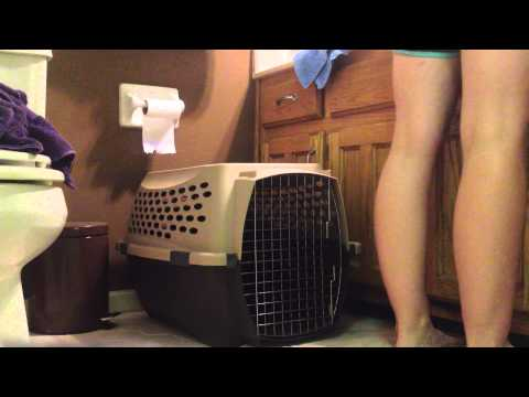 How to Teach Your Pup To Calmly Hang Out in the Crate and Stop Barking