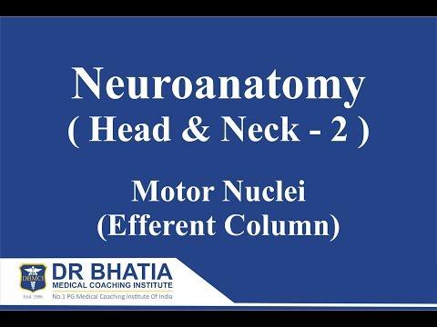 Download DBMCI- Dr  Ashwani Kumar- Neuroanatomy (Head & Neck