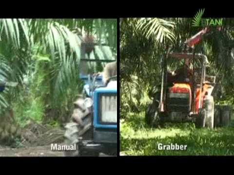 Palm Fruit : Manual Cutter vs Motorized Cutter (I)
