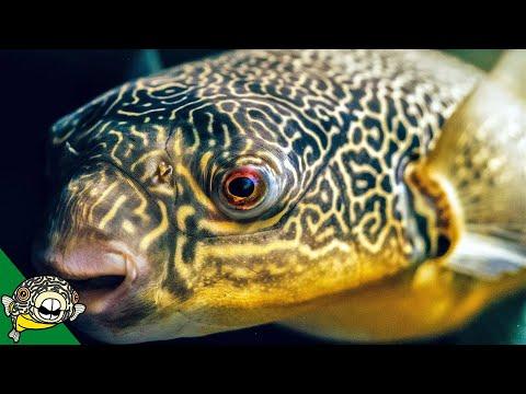 Aquarium Fish Unboxing - Box Two-No has a surprise