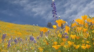 """Peaceful Music, Relaxing Music, Instrumental Music """"Beneath the Summer Skies"""" by Tim Janis"""