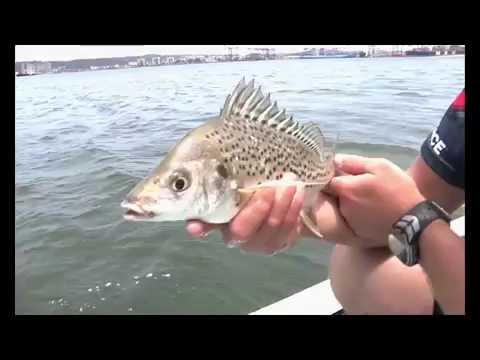 ASFN PowerAngling in Durban harbour for Grunter on the light tackle