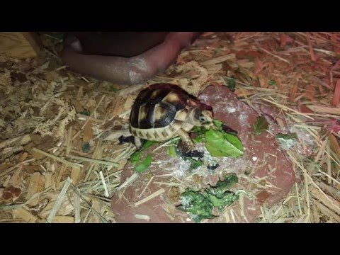 Zoo Med Tortoise Habitat - Easy To Build Habitat