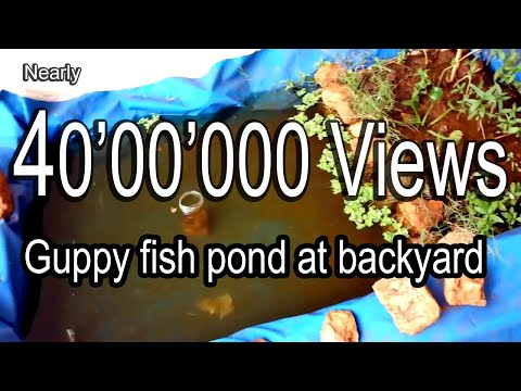 How to make easy guppy fish pond at backyard