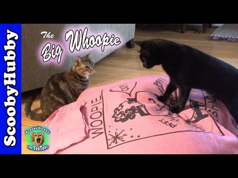 The Big Whoopie -- Cat Clips #90