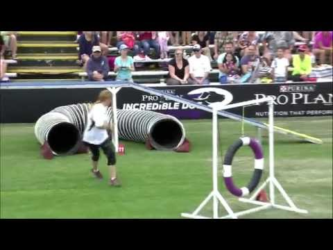 Large Dog Agility 1st Place - Incredible Dog Challenge 2015 Huntington Beach, CA