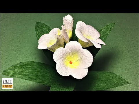 Hlss media| How to make pretty plumeria paper flower| plumeria crepe paper  flower making tutorials