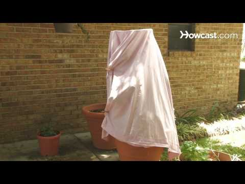 How to Protect Plants & Flowers from Frost