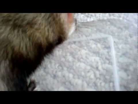 Dexter eats a ''House Centipede