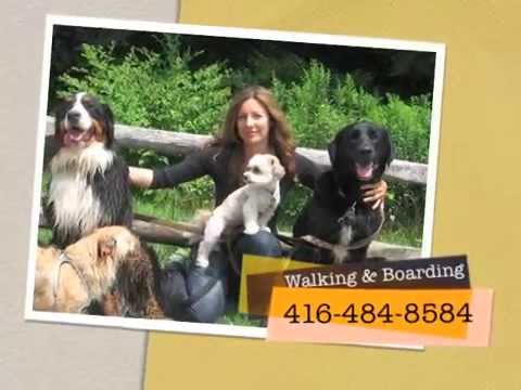 Dog Walkers & Dog Day Care Center in Toronto (Linda at OneLuckyDog.ca)