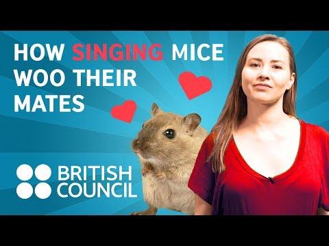 How singing mice woo their mates | Famelab