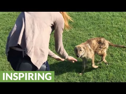 Abandoned dog with broken leg gets new life