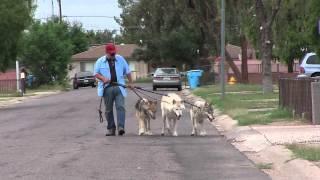 Walking the Wolfdogs