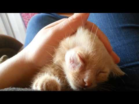 How to heal a cats cut without a vet