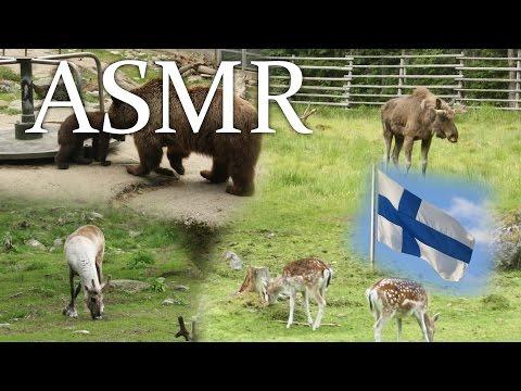 ASMR Male reading Wikipedia in Finnish - soft speaking - Metsän Eläimet