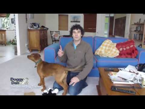 How To Train Your Dog Not To Bark - Stop Dog Barking
