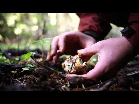 Mushroom Hunting For Chanterelles, Lion's Mane & More