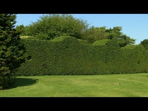 Privet Gardens | P. Allen Smith Classics