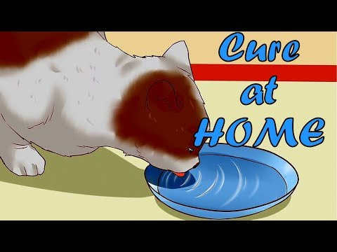 How to Cure Cat Constipation Symptoms, Home Remedies, Causes, and Treatments