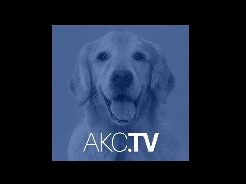 AKC Live - May 2nd, 2018 - Episode 107