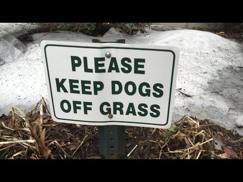 Keep Dogs Off WHAT Grass 3 by OxyMoronGuyDotCom