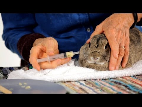 How to Give a Rabbit a Pill | Pet Rabbits