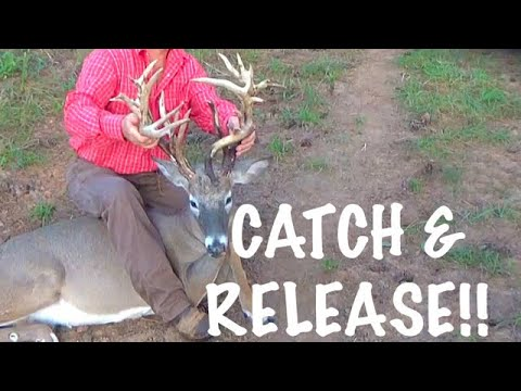 CATCH & RELEASE MONSTER WHITETAIL BUCKS at Hollis Farms