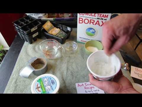 Borax Ant Killer Sugar Bait for Vegetable Gardens: Make Your Own - The Rusted Garden 2104